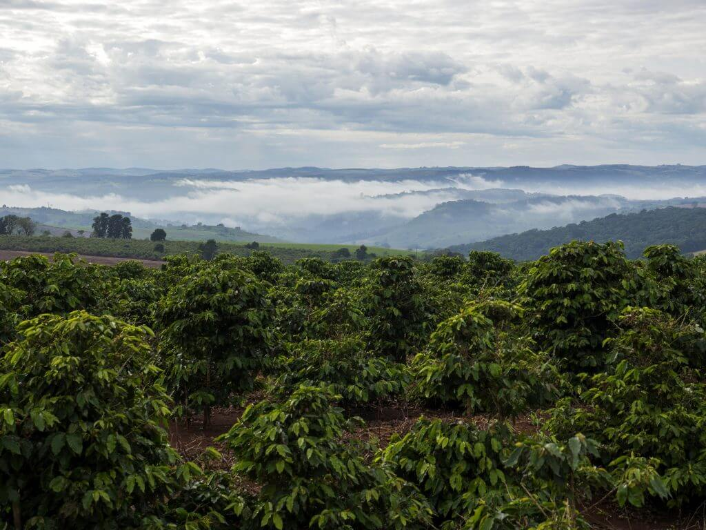 coffee supplier - coffee plantation
